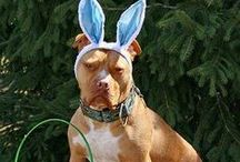 DRESS UP YOUR DOG / by Judy Clark