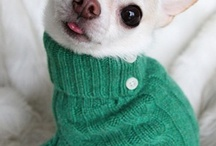 ~ Crazy About Chihuahua's ~  / Dedicated to: Sassy, Star, Sable, Paisley and Chloe! My love for the Chihuahua breed spans 25 years, they are my heart! / by Janice Skrapka