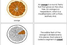Montessori Nomenclature (in Color) - Botany / Botany Nomenclature Cards and Books in color. / by Montessori Print Shop