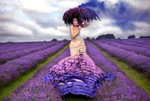 Don't you love lavender & lilac color? / For all the lovers of beautiful lavender flowers and the lilac color.