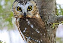 What a HOOT. / by Diana Graves