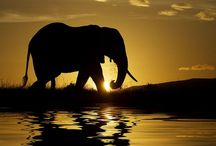 Elephants / by Diana Graves