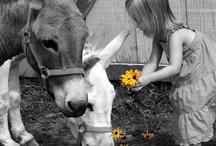 Donkeys / by Diana Graves