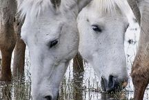 Horses / by Diana Graves