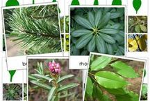 Montessori Science - Plants / Learn all about plants and their various parts. / by Montessori Print Shop