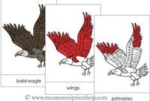 Zoology Nomenclature (in Red) / Includes 3-part cards and books for Zoology Nomenclature - Montessori style!