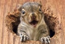 Squirrels / by Diana Graves