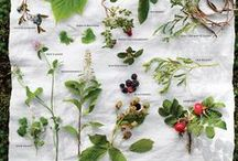 """Living in forest and field / General foraging info. Companion to my """"God Grows My Garden"""" board (which is more specific to the plants that I have readily available)."""