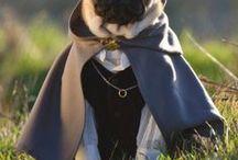 I shall call it the puggery / Someday I shall have a pug named Ugh the Loaf, otherwise known as Snuffleloaf, Pugloaf, Ughloaf, Snortloaf, and Grunt.