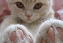 Gato / The smallest feline is a masterpiece. - Leonardo Da Vinci     / by sullivan moore