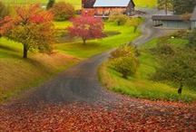 Autumn Cycle / images that remind me of that rich, bejeweled time known as autumn
