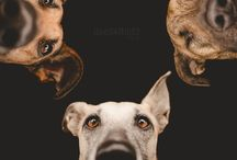 Dogs and more / by Monnie ✿