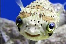 Pretty Fish / by Polly Sue Rowlen