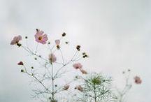 flowers. / by Elina Lartaud