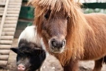 Ponies and Piggies / by Natalie Johnson