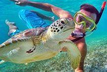 GoPro Animals / Photos and videos of animals captured on GoPro.
