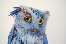 Owls - Everyone is fond of Owls