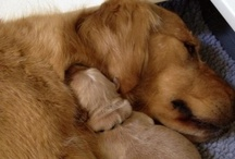 Canine Cuddles