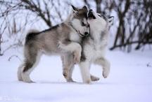 For my Alaskan lodge