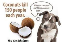 All Things Coconut!
