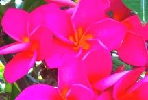 Flowers & Gardening