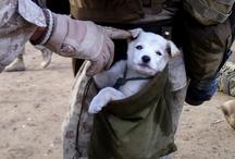Warrior Service Dogs