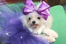 Cutest puppies / Teacup Maltese  / by Beau Monde Teacup Puppies