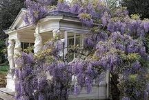Wisteria Lane Cottage