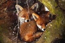 """All Creatures: Small / I hesitate to add the """"Awww"""" group, but these type of things have to be re-pinned SOMEWHERE. / by Dennis Sylvester Hurd"""