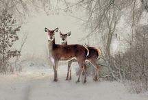 ..winter wonderland..