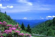 Newfound Gap / by Visit Gatlinburg