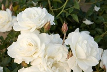 Curb Appeal / by Tina Raines