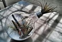 Air Plants! / Tillandsia lend themselves to many creative ideas to transform your space!