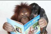 ANIMALS READ TOO!
