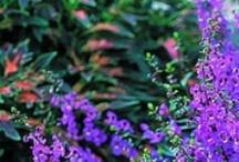 Gardening / by Charmaine Milioni