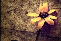 Poppy / by Amy Carroll