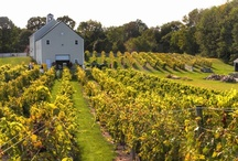 Wine & Cheese Trails / New Hampshire has an abundance of wineries and cheese makers.  Follow our Wine & Cheese Trail here: http://visitnh.gov/itineraries/wine-cheese-itinerary.pdf. / by VisitNH.gov