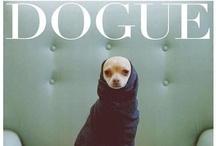 Animals in fashion, design & photography
