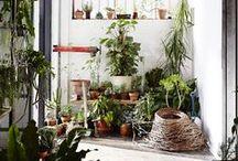 Herbalism / by Heather Mulholland