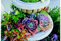 Succulents / I love succulents! They're probably the best plant for me, tough and sturdy with little care needed.