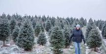 NH Christmas Tree Farms / Decking the hall with your very own New Hampshire Grown Christmas Tree