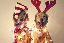 Holiday Love! / by Courtney Morse