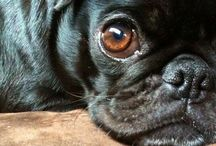 And They Call It Puggy Love