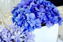 Blue Wedding Inspirations