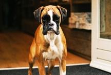 Pet Business Possibilities / Dream Business Pet Shop / by Chris Norman