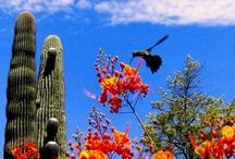 Welcome to Arizona! / Arizona is a land of wonders!