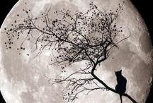 Halloween / by Yadi McCoy