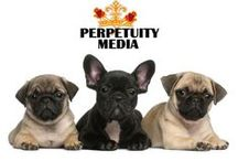 Perpetuity Media / ... we are story tellers, publishers, creators & curators. We can help you publish & distribute your book, movie or music...  www.perpetuitymedia.com / by Jo Brothers
