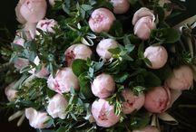 Flowerific - Flowers / ... flowers, bulbs, blooms ... peonies, roses, bulbs, petals, magic ...