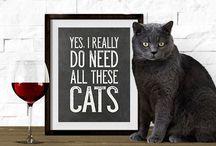 Cat stuff